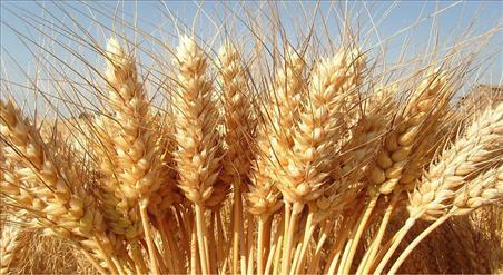 E' la Cina alla base delle tensioni nel mercato mondiale dei cereali ?